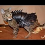 memes de gatos, gato con armadura, gato guerrero