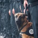 perro policia diesel, salvemos a los animales
