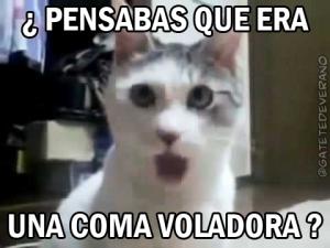 gatoasombro_comavoladora