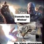 origen de los memes de gatos y la avorgesa