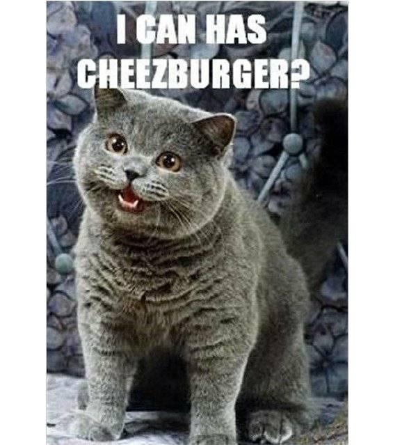 can i have a cheezburger